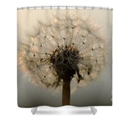 Dandelion In Backlight Shower Curtain