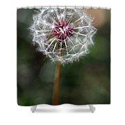 Dandelion Seed Head Shower Curtain
