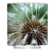 Dandelion Tears Shower Curtain by Paul Ward