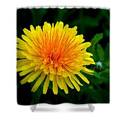 Dandy Among Daisies Shower Curtain