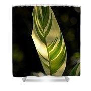 Dappled Ginger Leaf Shower Curtain