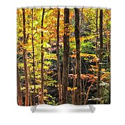 Dappled Sun On Fall Colors Shower Curtain