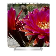 Dark Pink Cactus Flowers Shower Curtain