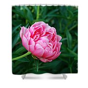 Dark Pink Peony Flower Series 2 Shower Curtain