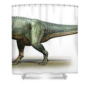 Daspletosaurus Torosus, A Prehistoric Shower Curtain