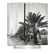 Date Palms On A Country Road Shower Curtain