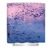 Dawn Sky Reflected In Pool Shower Curtain