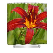 Day Lilly In Diffused Daylight Shower Curtain