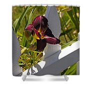 Day Lily And White Fence II Shower Curtain