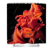 Day Lily Flame Shower Curtain