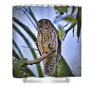 Daylight Shy V2 Shower Curtain