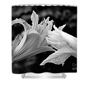 Daylily Study In Bw IIi Shower Curtain