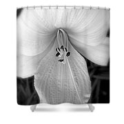 Daylily Study In Bw Shower Curtain