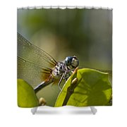 Dazzling Blue Skimmer Shower Curtain