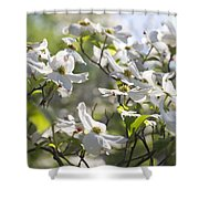 Dazzling Sunlit White Spring Dogwood Blossoms Shower Curtain