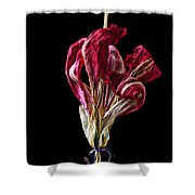 Dead Dried Tulip Shower Curtain