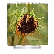 Dead Sunflower Shower Curtain