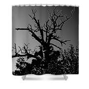 Dead Tree II Shower Curtain