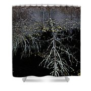 Dead Tree Reflects In Black Water Shower Curtain