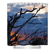 Dead Trees At Sunrise Shower Curtain