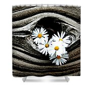 Dead Wood And Asters Shower Curtain
