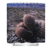 Death Valley Cactus Shower Curtain