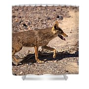 Death Valley Coyote Shower Curtain