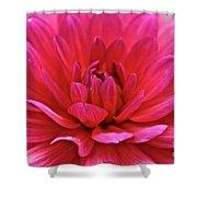 Decadent Dahlia Shower Curtain