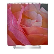 December Rose Shower Curtain