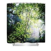 Deciduous Wood, Killarney National Shower Curtain