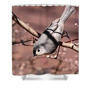 Decked Out - Tufted Titmouse Shower Curtain