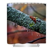 Decorated Branch Shower Curtain
