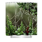 Decorated Bush Quogue Wildlife Preserve Shower Curtain