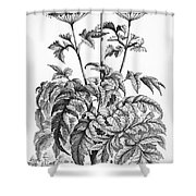 Decorative Flower Shower Curtain