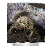 Decorator Crab With Mauve Sponge Shower Curtain