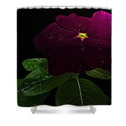 Deep Burgandy Impatient Shower Curtain