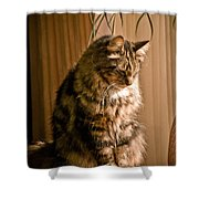 Deep In Kitty Thought Shower Curtain