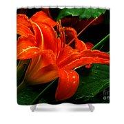Deep Orange Day Lily Shower Curtain