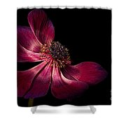 Deep Pink Anemone - 2 Shower Curtain