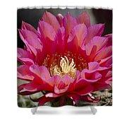 Deep Pink Cactus Flower Shower Curtain
