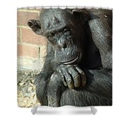 Gorilla Deep Thoughts Shower Curtain