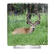 Deer At Rest Shower Curtain