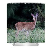 Deer - Doe - I Heard Something Shower Curtain