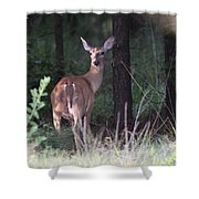 Deer - Doe - Nearing The Edge Shower Curtain