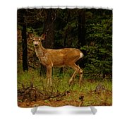 Deer Gazing  Shower Curtain
