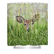 Deer In Hiding Shower Curtain