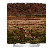 Deer In The Golden Meadow Shower Curtain