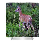 Deer In The Marsh Shower Curtain