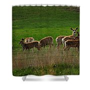 Deer In The Meadow Shower Curtain