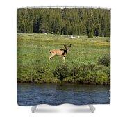 Deer In Tuolumne Meadow Shower Curtain
